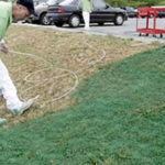 Lawn Painting Services